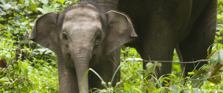 donate_to_elephant_family