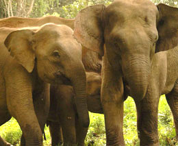 elephant_group_shot