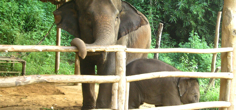 elephant_welfare
