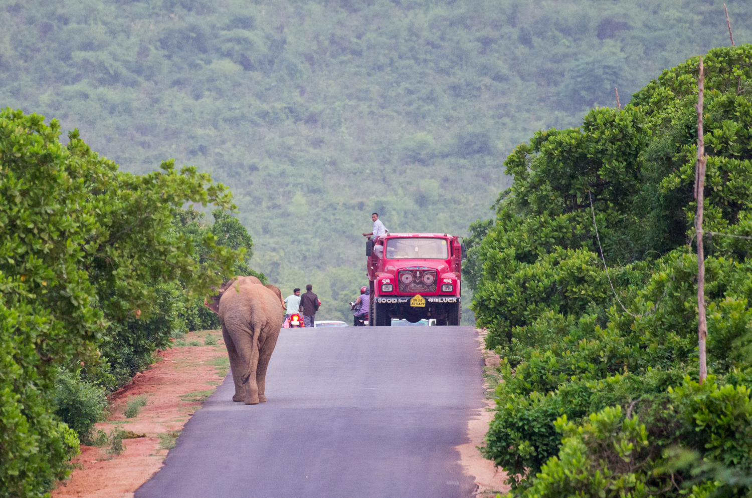 elephants and infrastructure