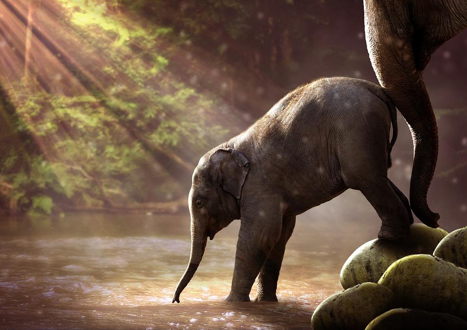 Apply for funding elephant family - Image elephant ...